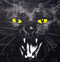 История суеверий о кошках и почему в Казахстане их не любят?