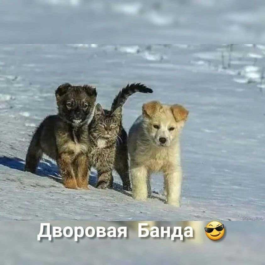 radius.kz/images/news_cats/144962633_8596-4699344234556_n.jpg