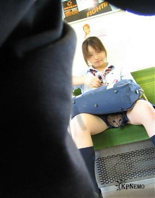 У японских школьниц под юбкой видео